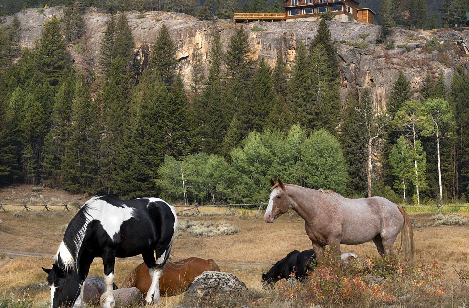 Horses are a part of the Hawley Mountain Family