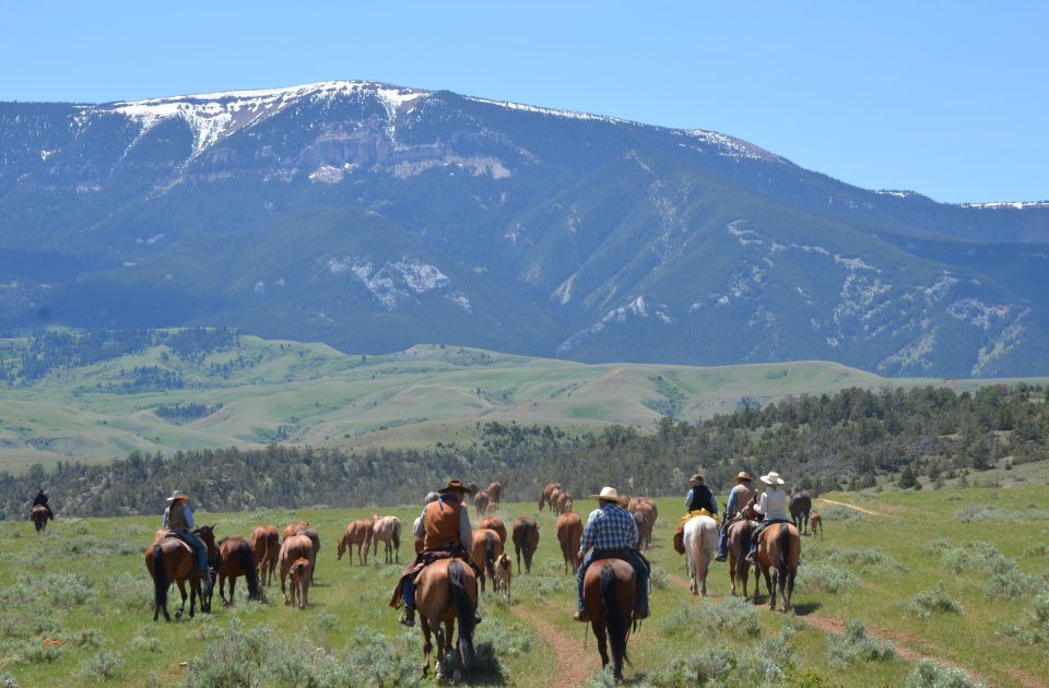 There's always work to be done on our guest ranch | Gathering Mares & Colts