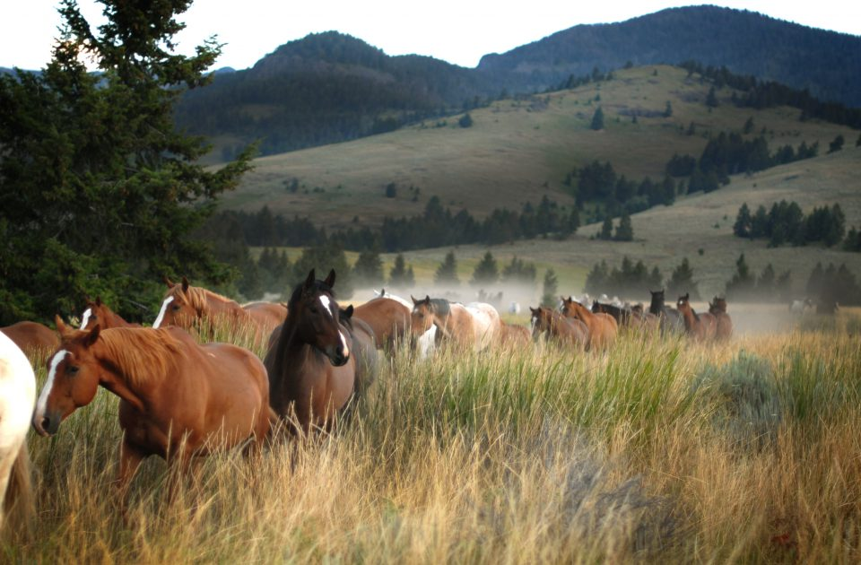 Life on a Montana Dude Ranch | Emigrant, MT