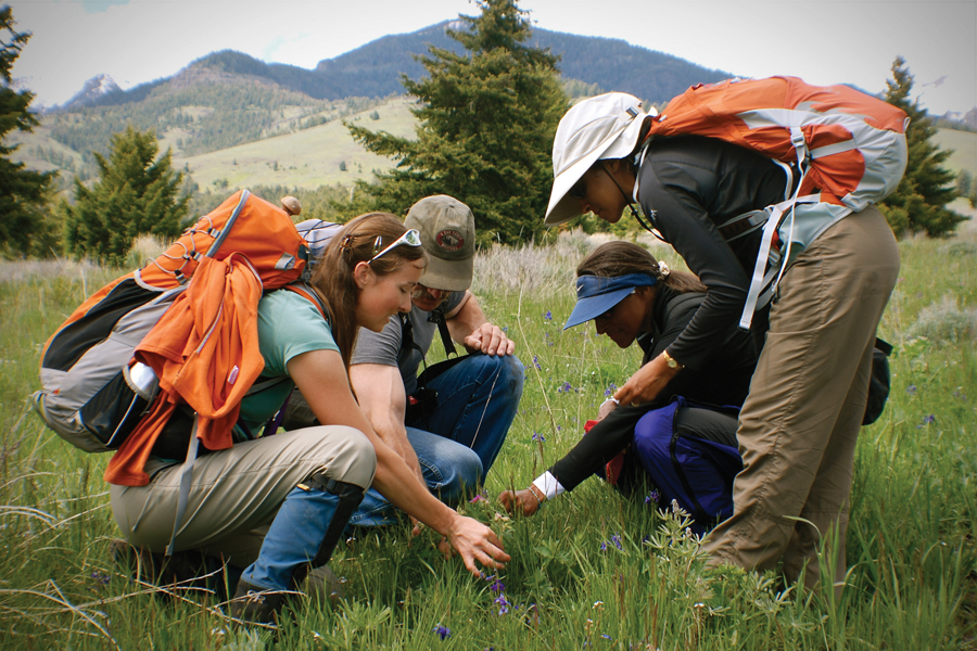 Learning to identify Montana's Wildflowers with a Naturalist