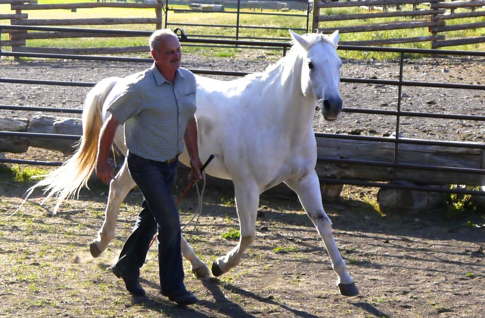 Natural Horsemanship is the specialty of the Rocking Z Ranch