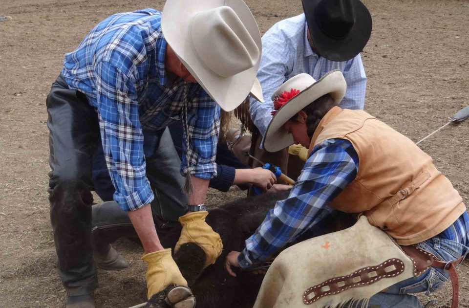 Get an upclose look at daily life on a cattle ranch