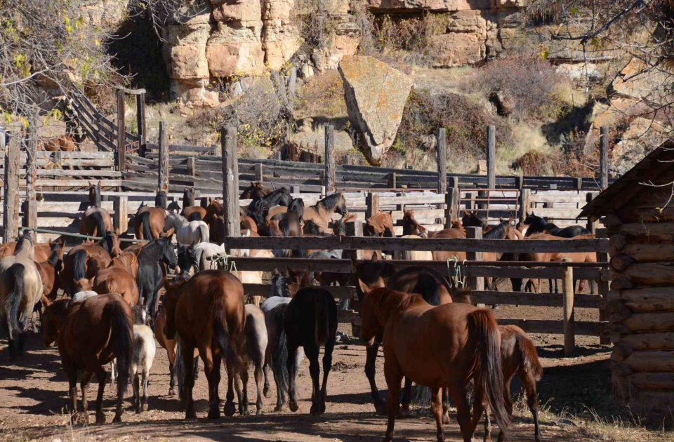Meet the horses of Dryhead Guest Ranch