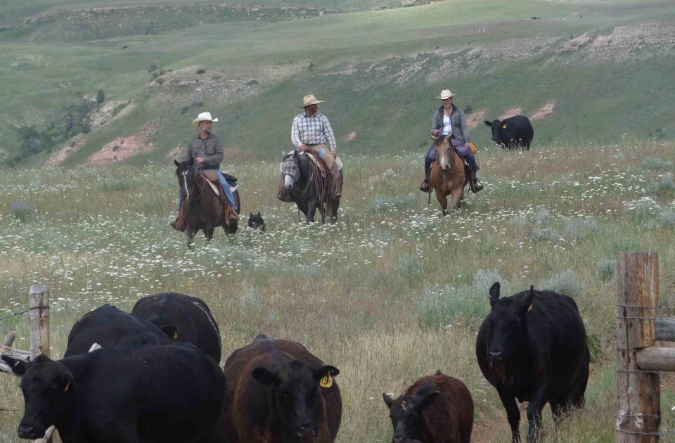 Working cattle isn't all work, enjoy your ride and conversations among friends