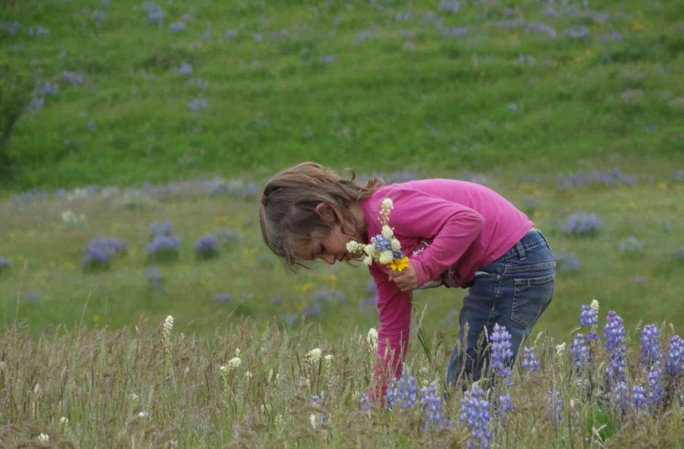 Field of Wildflowers on Dryhead Ranch