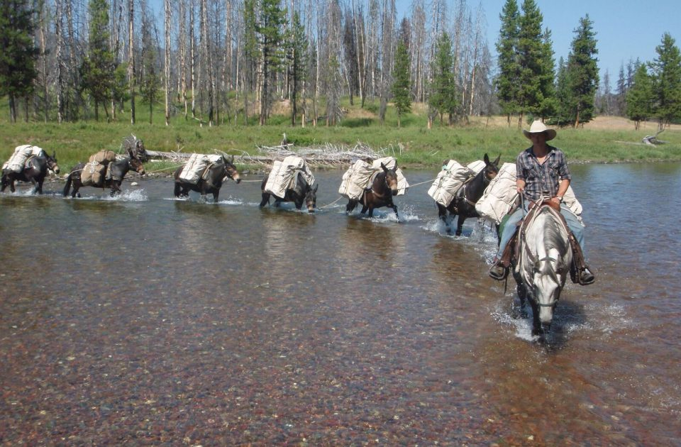 Pack string at a Montana dude ranch