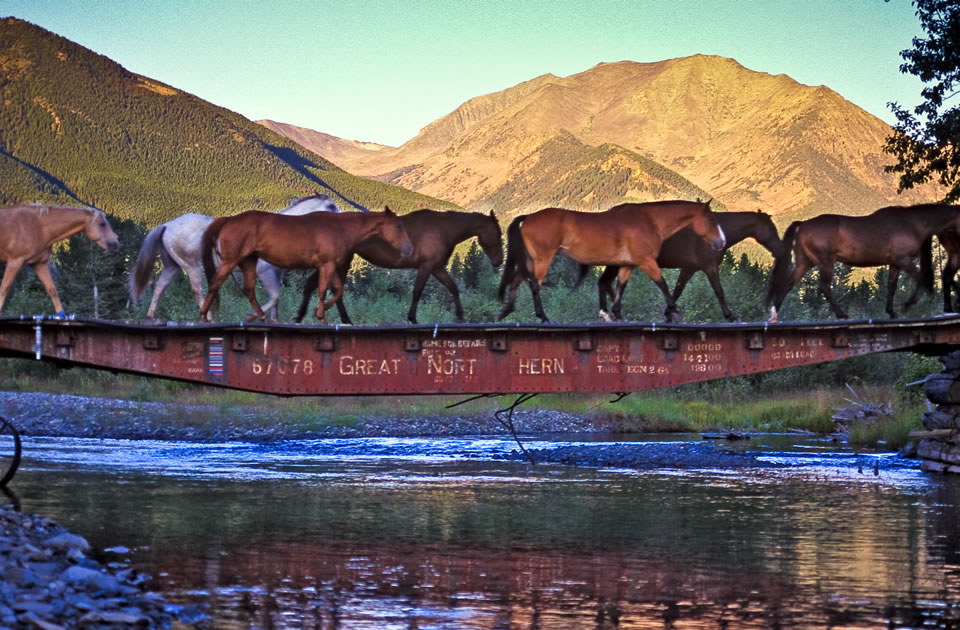 Sweet Grass Ranch Horses on Bridge