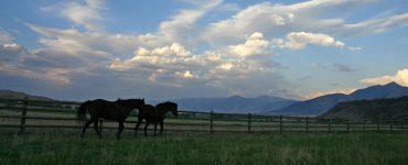 Horseback Riding on a Montana Dude Ranch