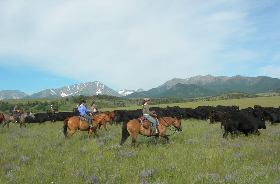 Montana Working Ranch | Sweet Grass Ranch