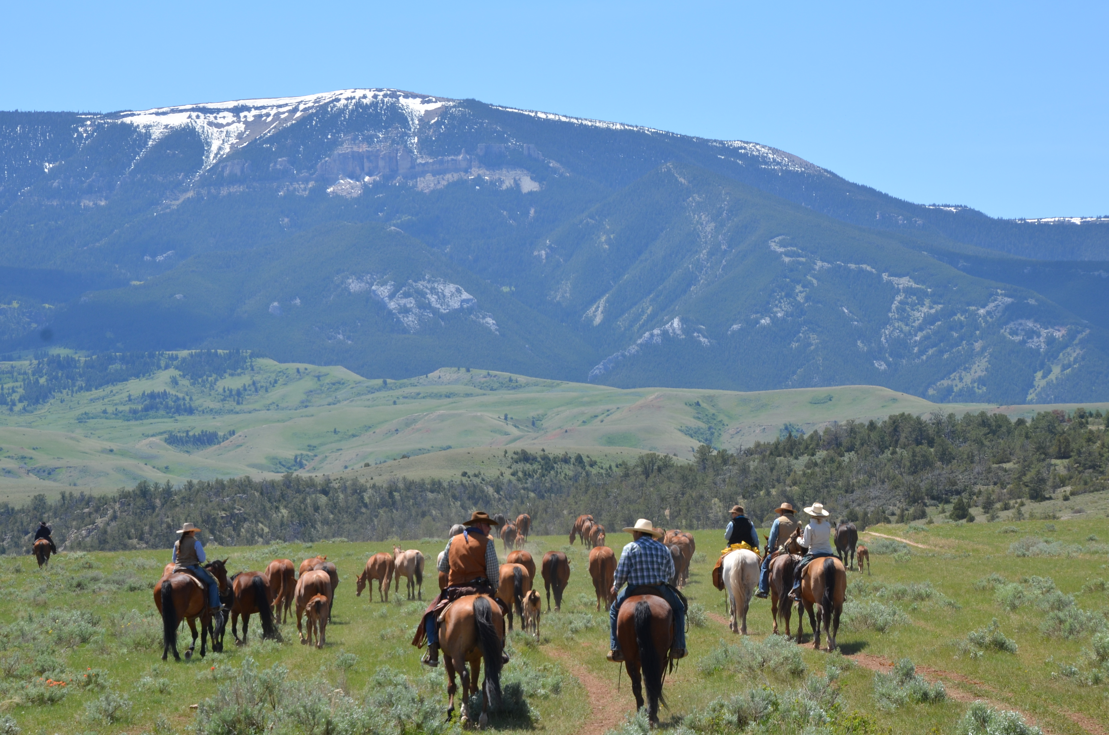 Cattle Drive | Dryhead Ranch