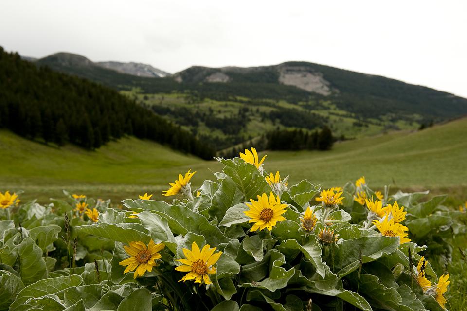 Breathtaking Montana Scenery
