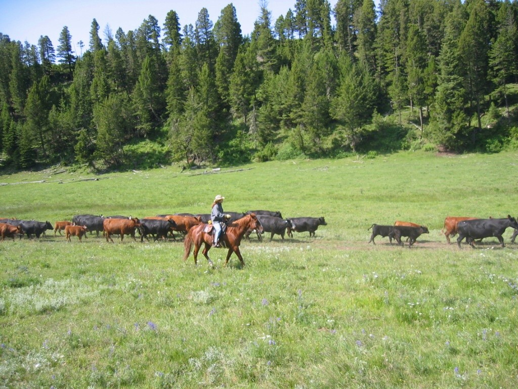Bonanza Creek Ranch